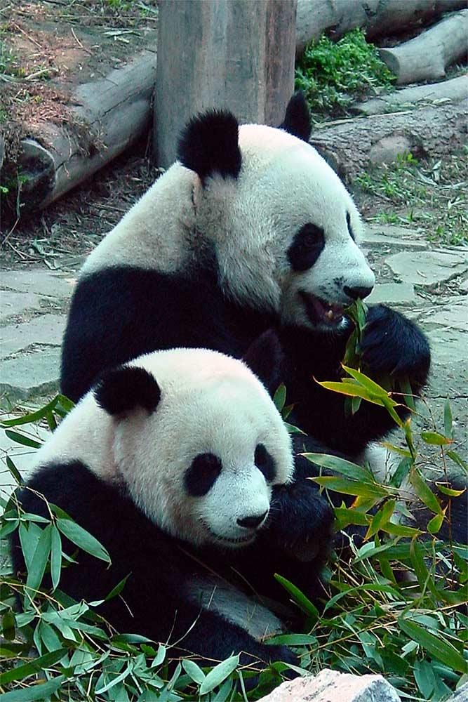 Chinesisches Duett