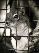 chipmunk in prison