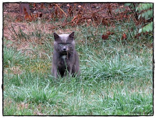 Chippi mon tit chat chasseur d'herbes lol