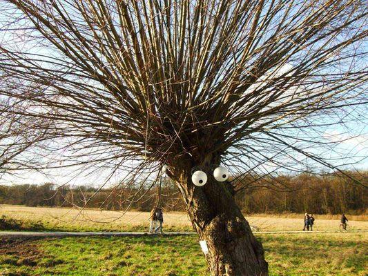 Chlodwig-Poth-Baum