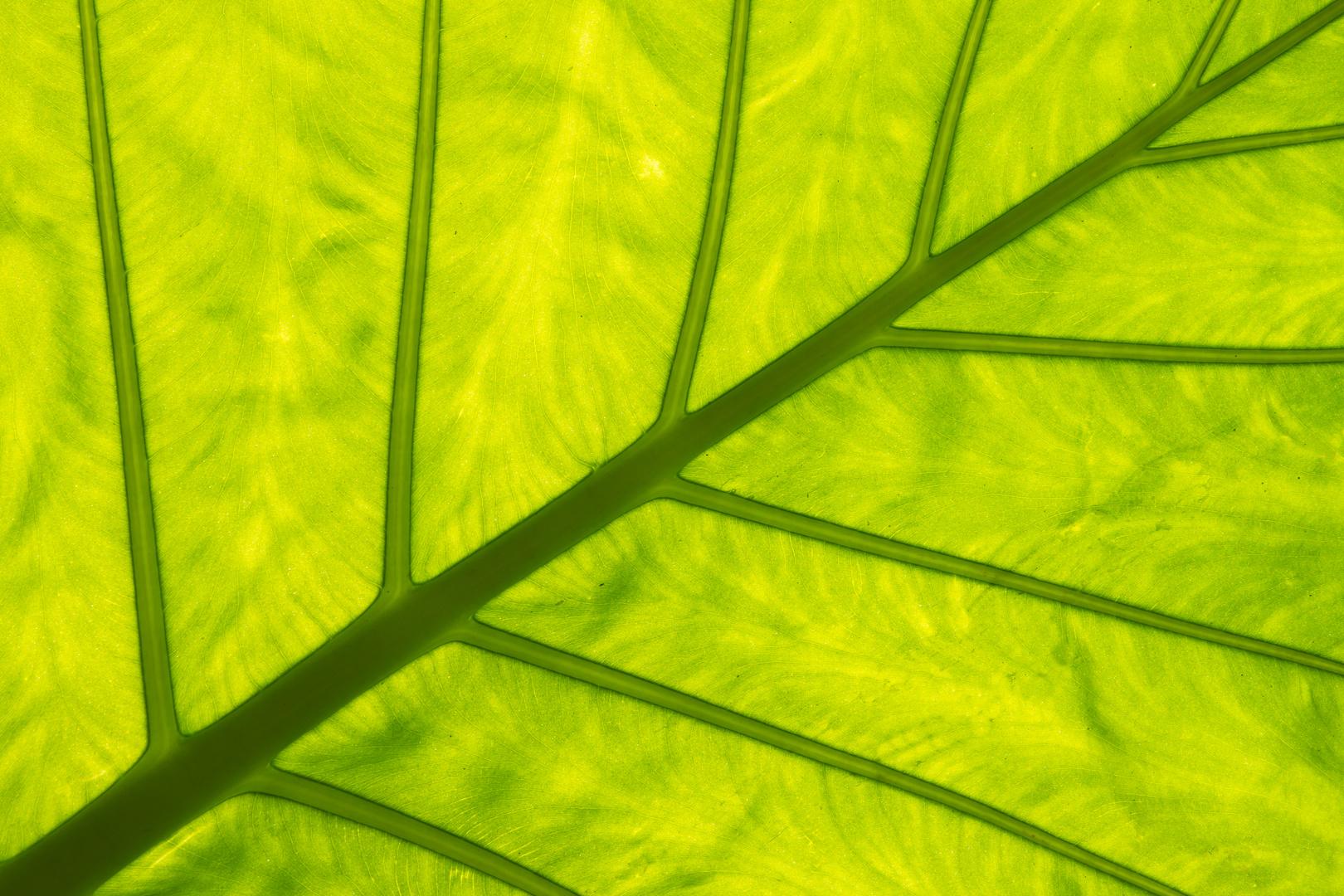~ chlorophyll ~