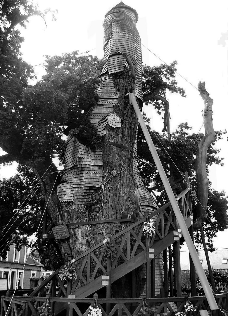 Chêne d'allouville-Bellefosse