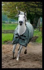Christine von Wiegen - Lichtgemälde - Pferde 02