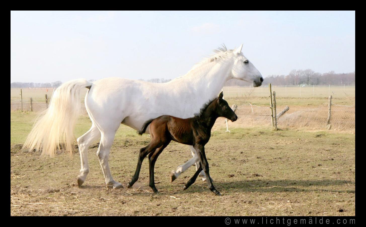 Christine von Wiegen - Lichtgemälde - Pferde 04