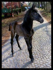 Christine von Wiegen - Lichtgemälde - Pferde 05