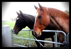 Christine von Wiegen - Lichtgemälde - Pferde 06