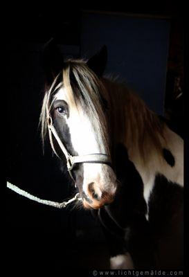 Christine von Wiegen - Lichtgemälde - Pferde 08