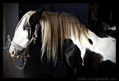Christine von Wiegen - Lichtgemälde - Pferde 09