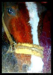Christine von Wiegen - Lichtgemälde - Pferde 10