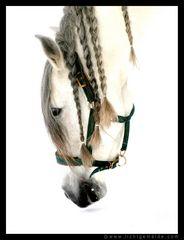 Christine von Wiegen - Lichtgemälde - Pferde