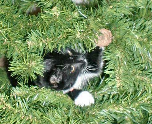 Christmas Tree Surprise