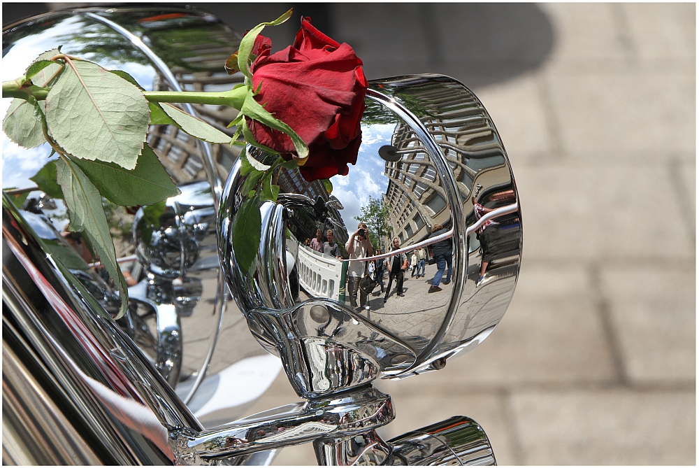Chrome and Roses