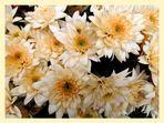 Chrysanthemen .....................