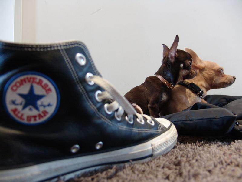 chucks and dogs