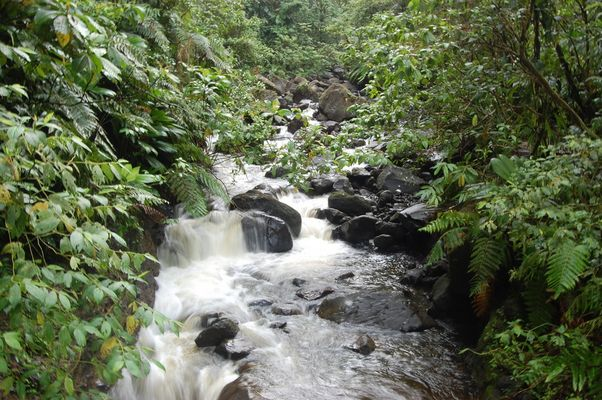 Chutes du carbet (Guadeloupe)