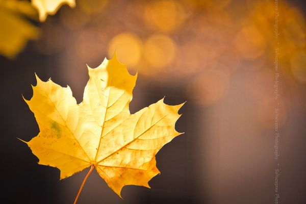 Ciao Herbst............