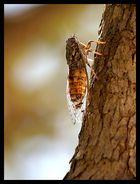 Cicale cicale cicale...e la formica?