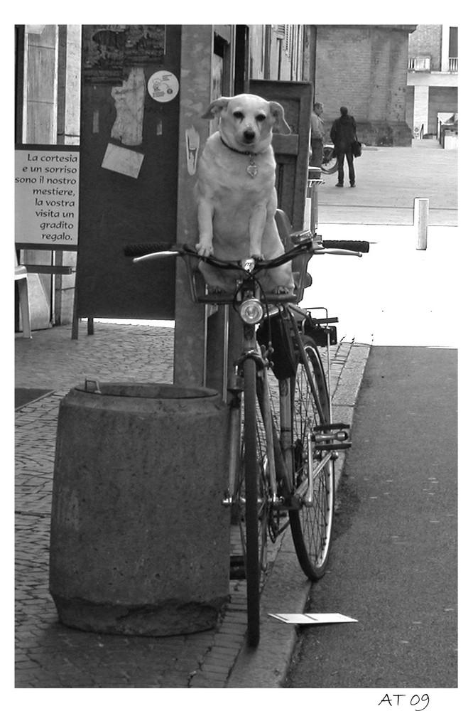 ciclista a quattro zampe