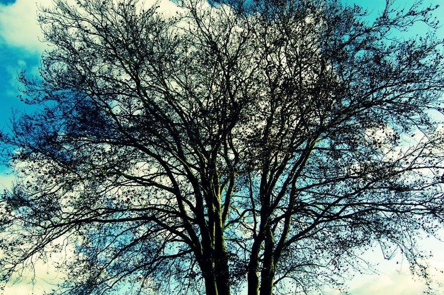 Ciel & arbre ... le silence ...