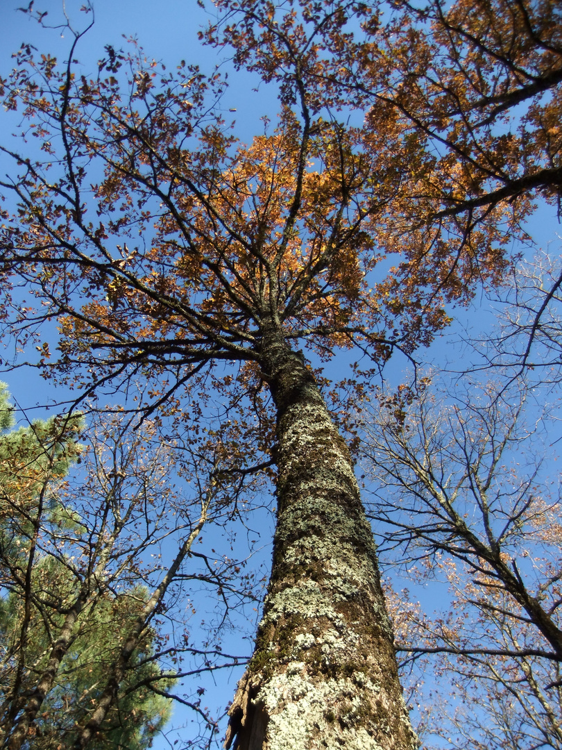 ciel bleu d'automne