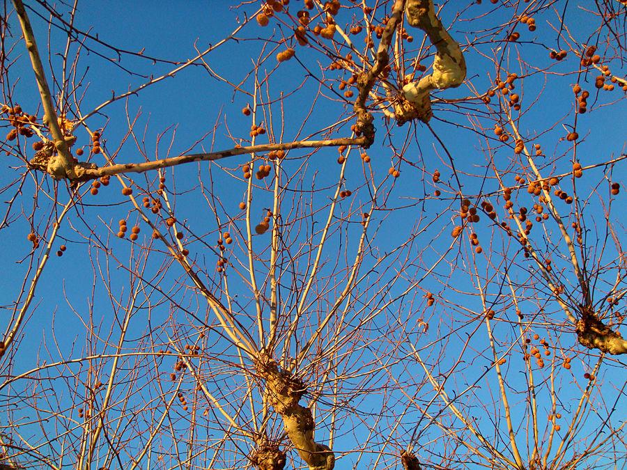 Ciel de froid et couleurs lavées d'automne