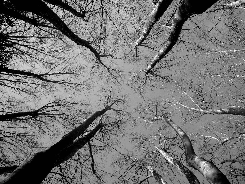 ... ciel et arbres ...