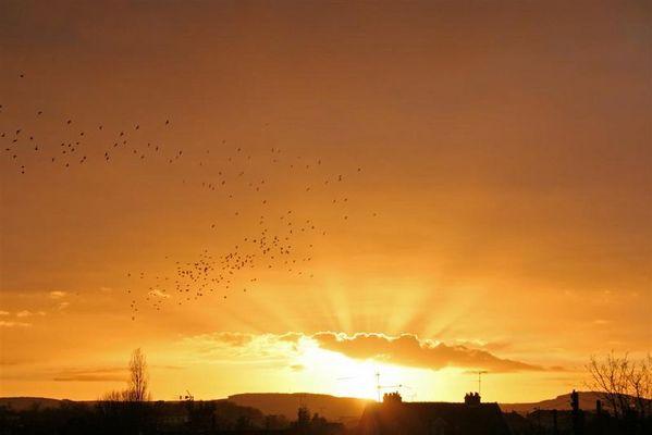 ciel-oiseaux