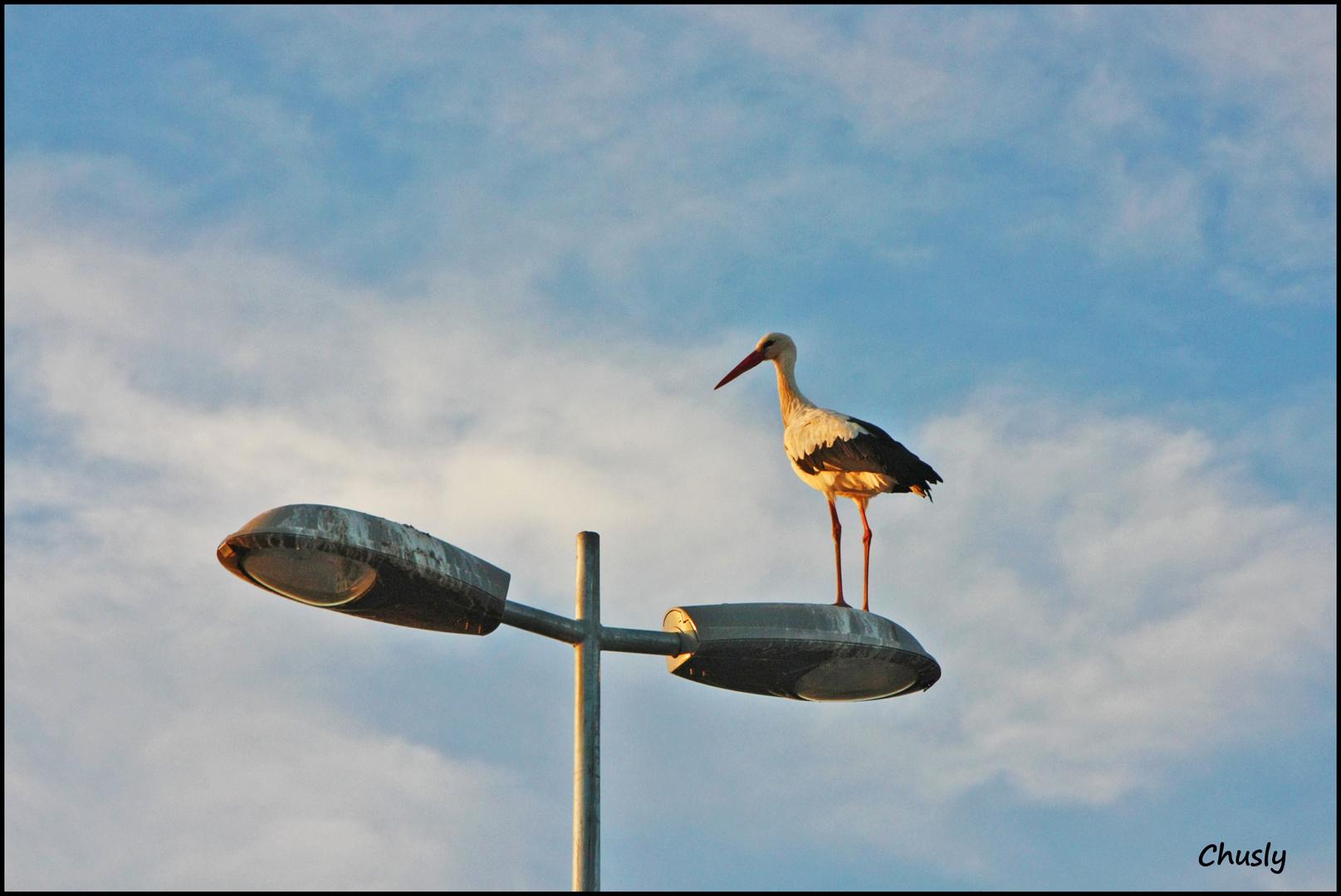 Cigüeña y farola - Stork and lamppost