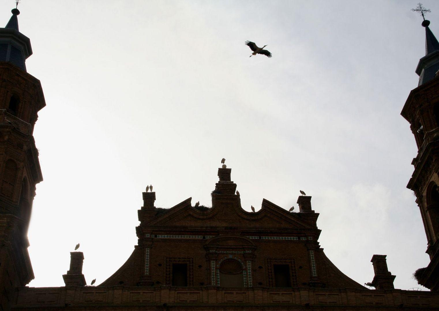 Cigüeñas en la Colegiata de San Miguel de Alfaro (La Rioja / abril de 2012)