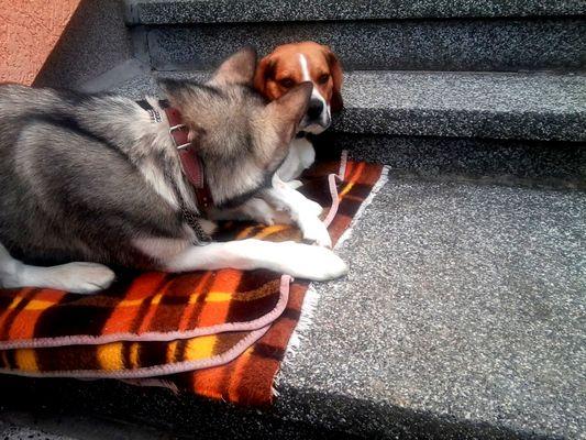 Cika und Max