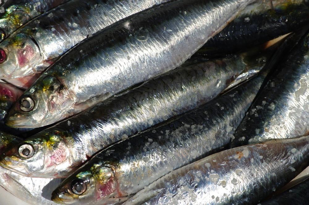 Cimetière de Sardines Portugaises