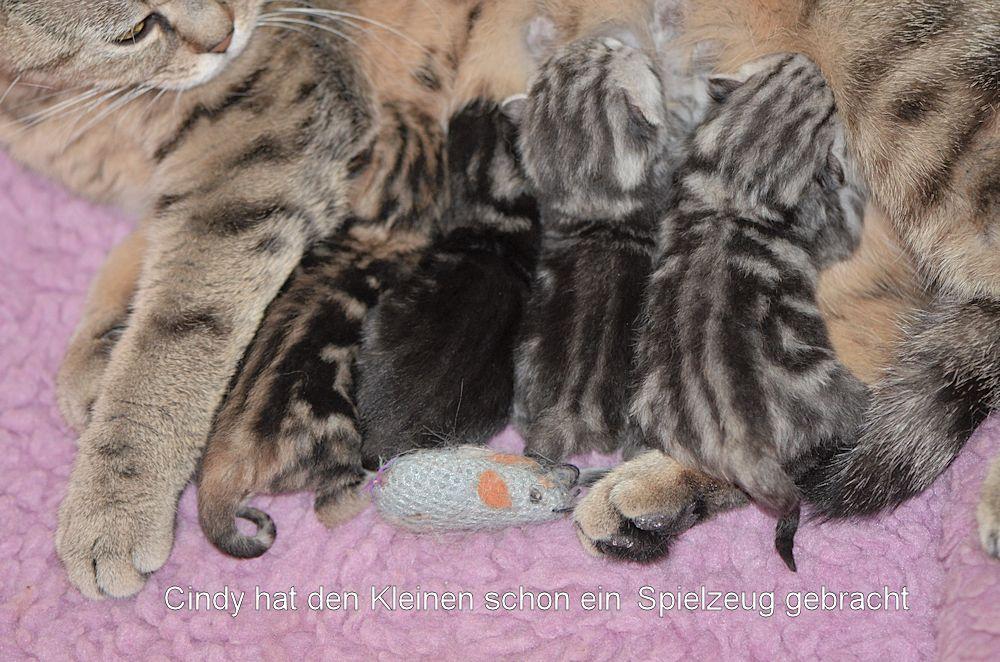Cindy hat am 6.4.14 vier süsse Kitten...