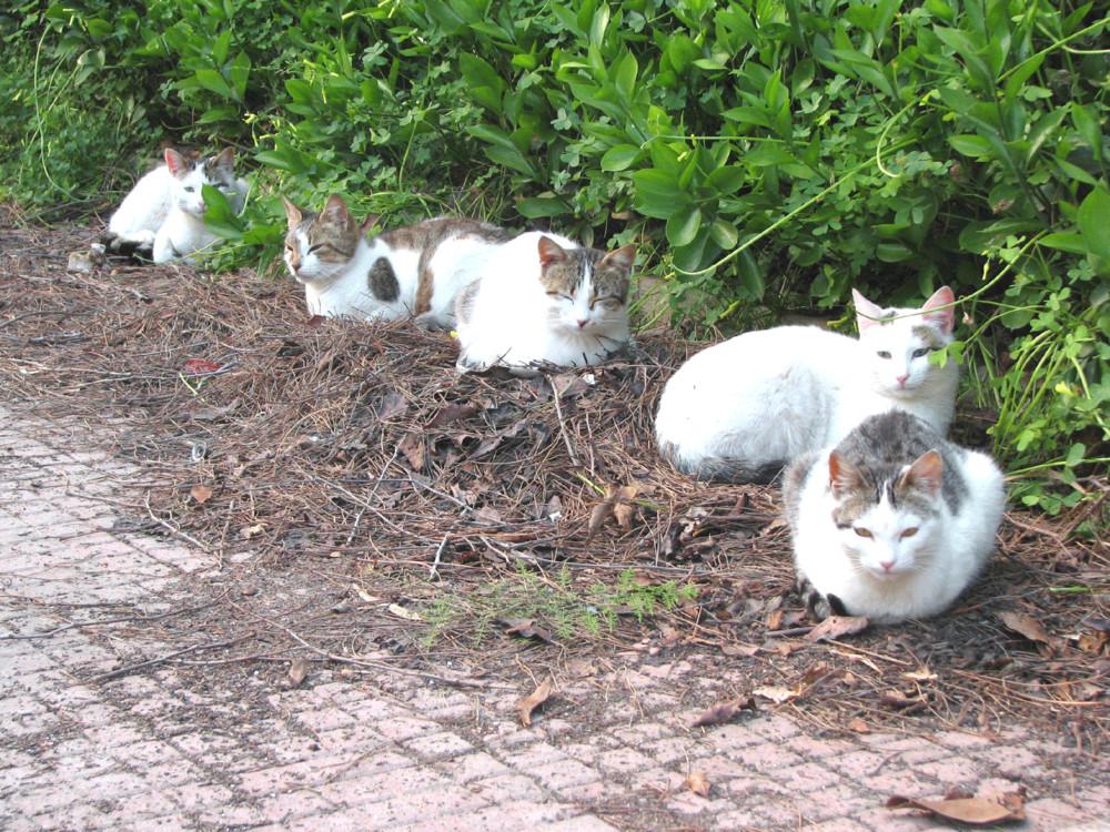 Cinque amiche al sole