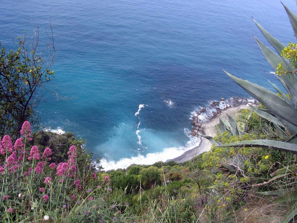 Cinque Terre, la costa e i suoi fiori