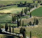 Cipressi 2:strada per Montichiello
