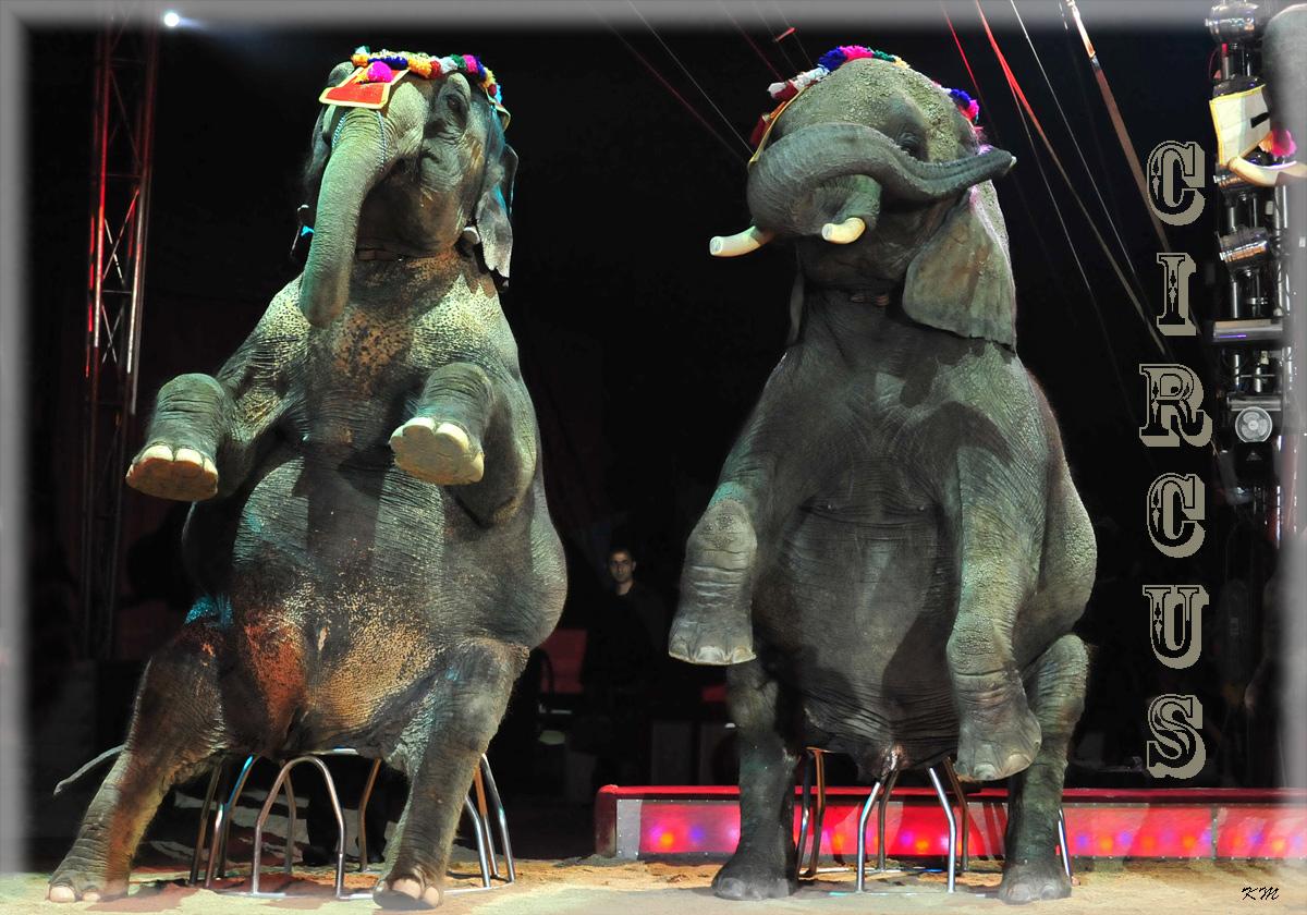 Circus, Circus 2
