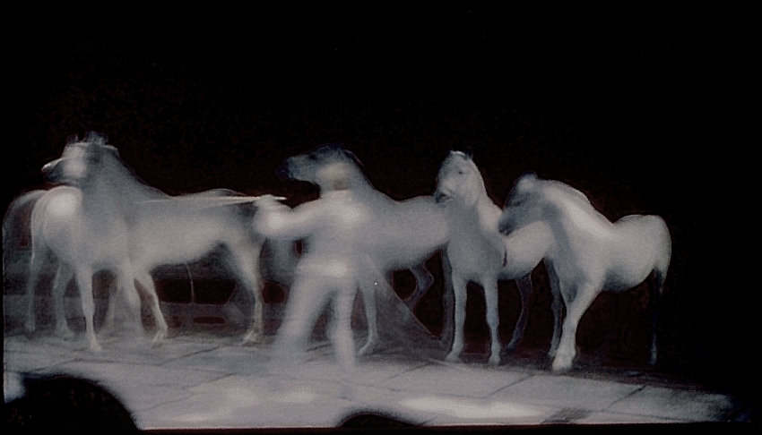 Circuspferde II