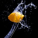 Citrus-Splash