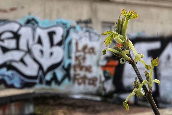 city spring II