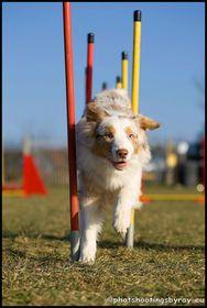 Sport avec chiens
