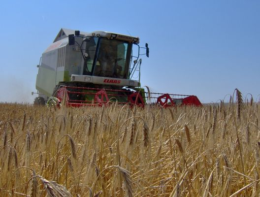 CLAAS MEDION 340 COMBINE HARVESTER IN THE BARLEY FIELD