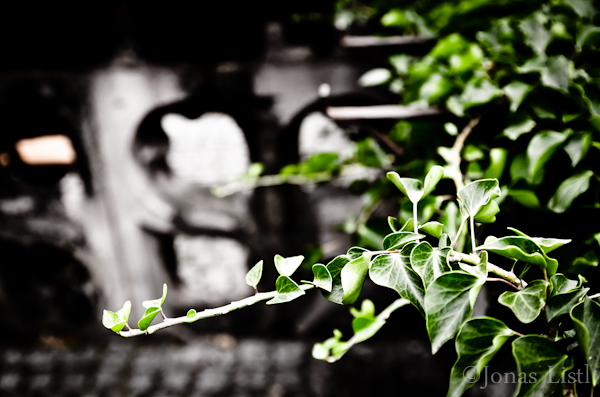 Clad_in_Ivy