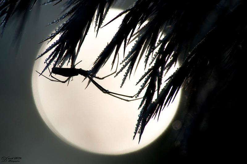 Clair de lune ?