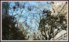 CLARIDAD FALTA, ENERO 2012, SIII. BCN.