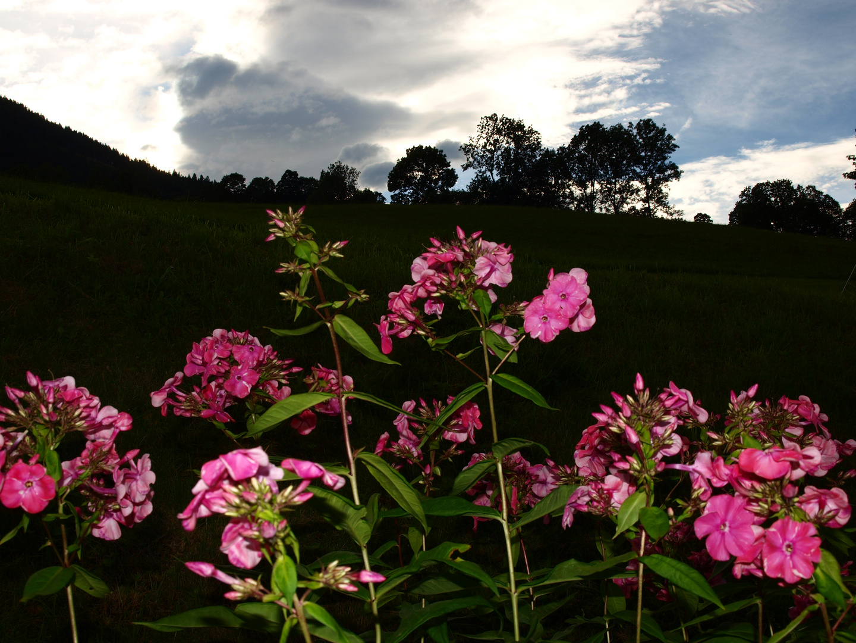 claroscuro floral