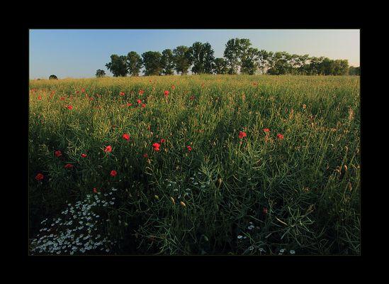 Claude Monets Pappel-Impressionen...