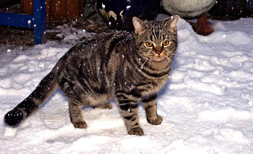 Claus Dieter und der Schnee ....
