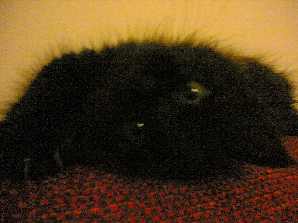 Cleo contorsionista