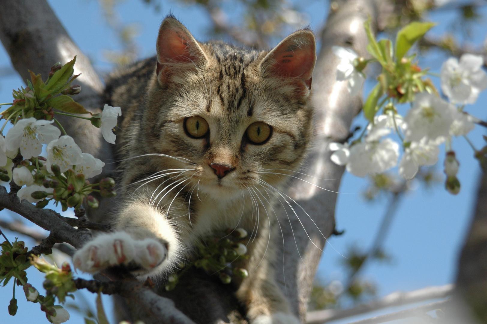 CLEO im Baum