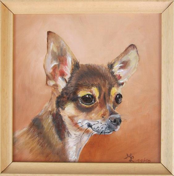 Cleo, mein Chihuahuamädchen